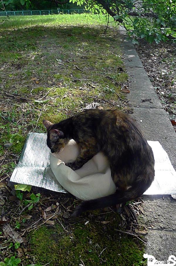 続 【検証シリーズ?】 猫の前にぼうしを置いてみた
