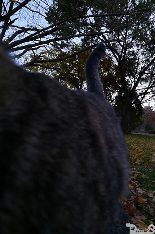 わざわざスレスレを通る猫