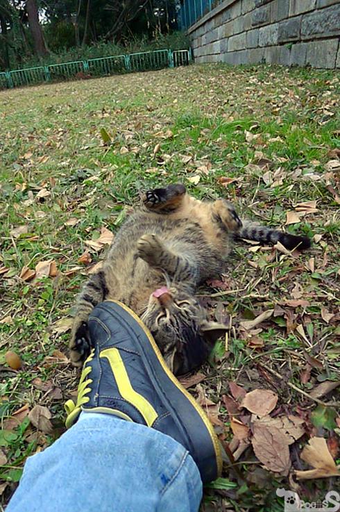 靴と格闘する猫