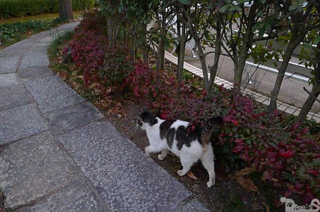 丸ちゃんと散歩 前編