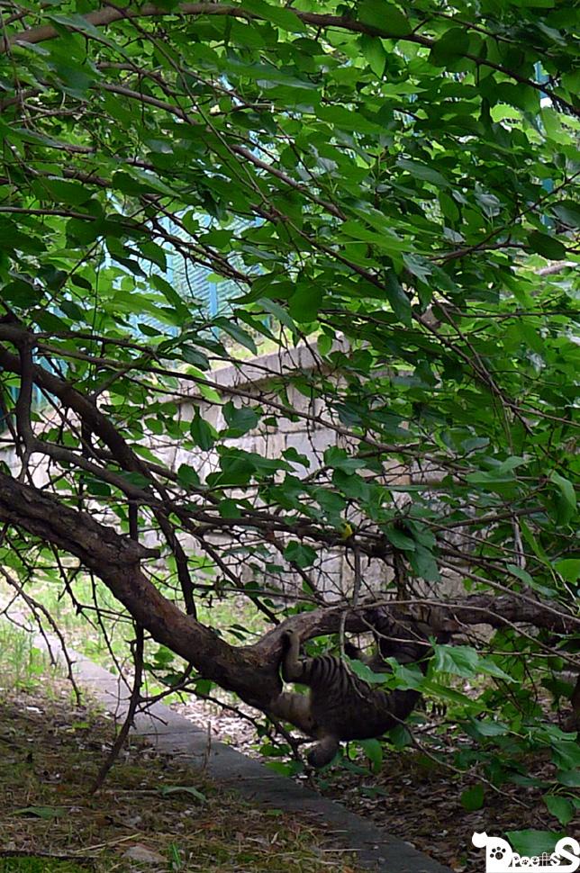 猫も木から落ちる