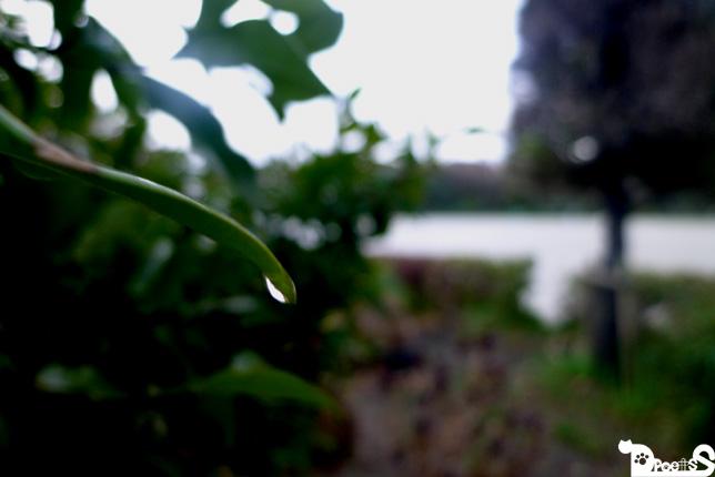 雨を感じる