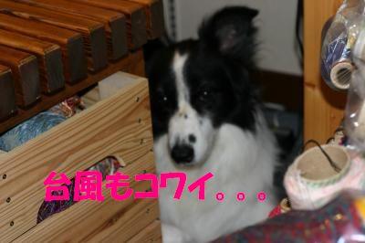 IMG_5384_convert_20110902171604.jpg