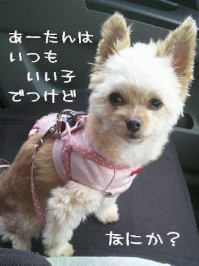 言い訳する犬