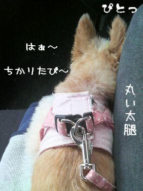 化けの皮がはがれた犬