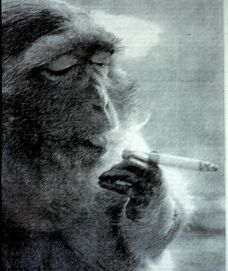 smokingmonkey.jpg