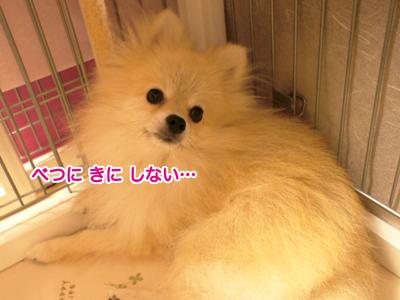 DSC03369.jpg