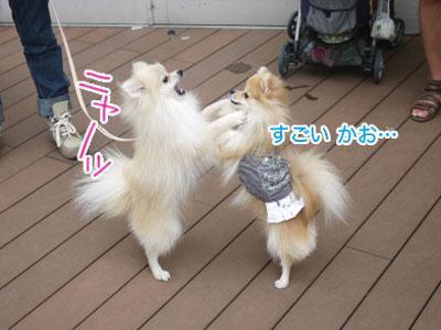 kashiwa04.jpg