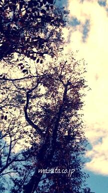 fc2blog_20121115182629c1f.jpg