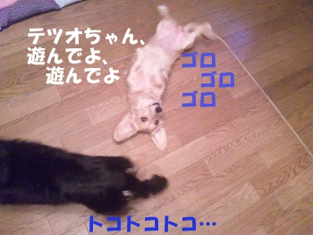写真1029(№254)1