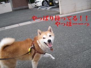 016_20111004152835.jpg