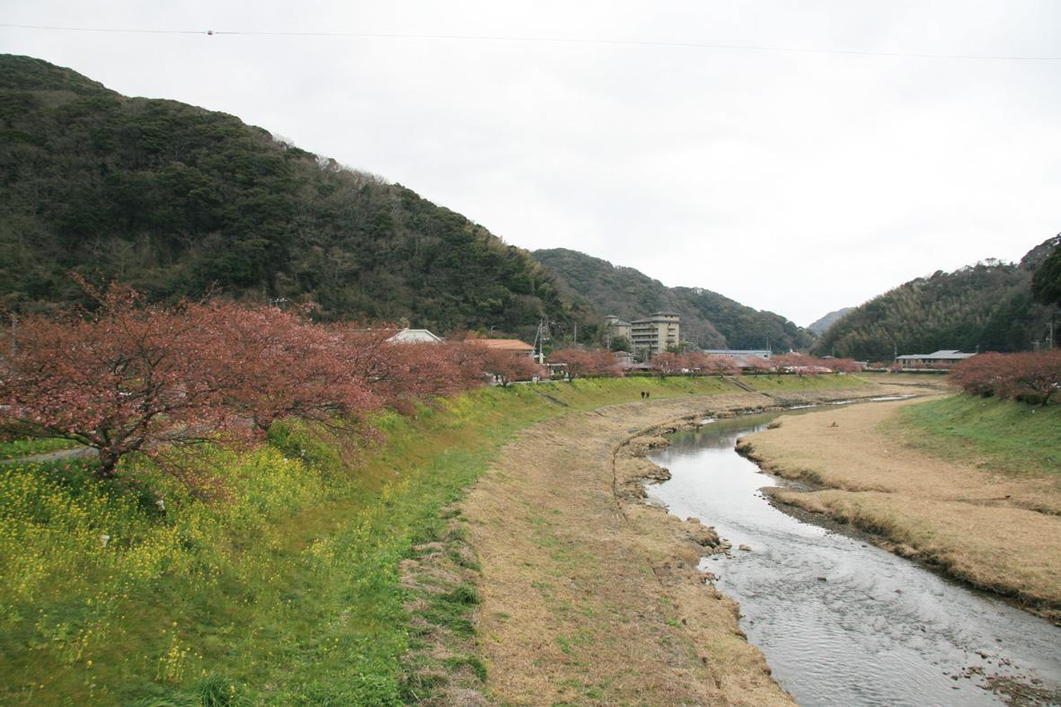 みなみ桜4