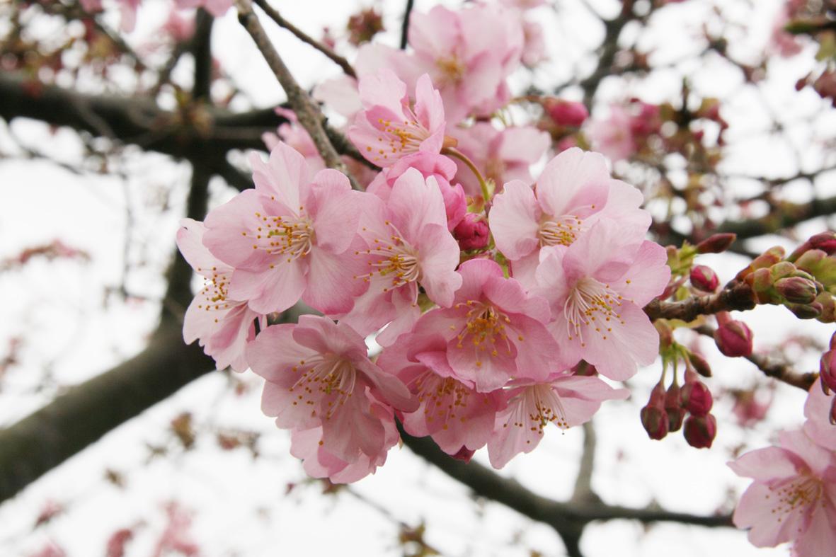 みなみ桜3
