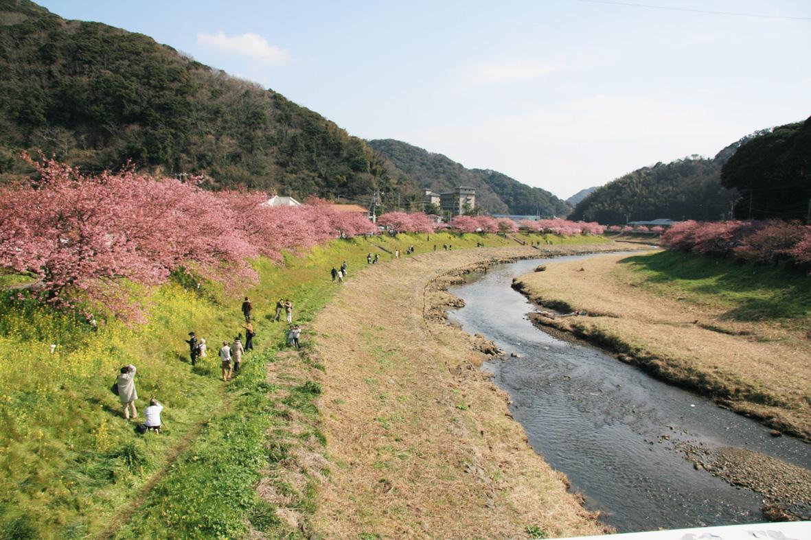みなみ桜001