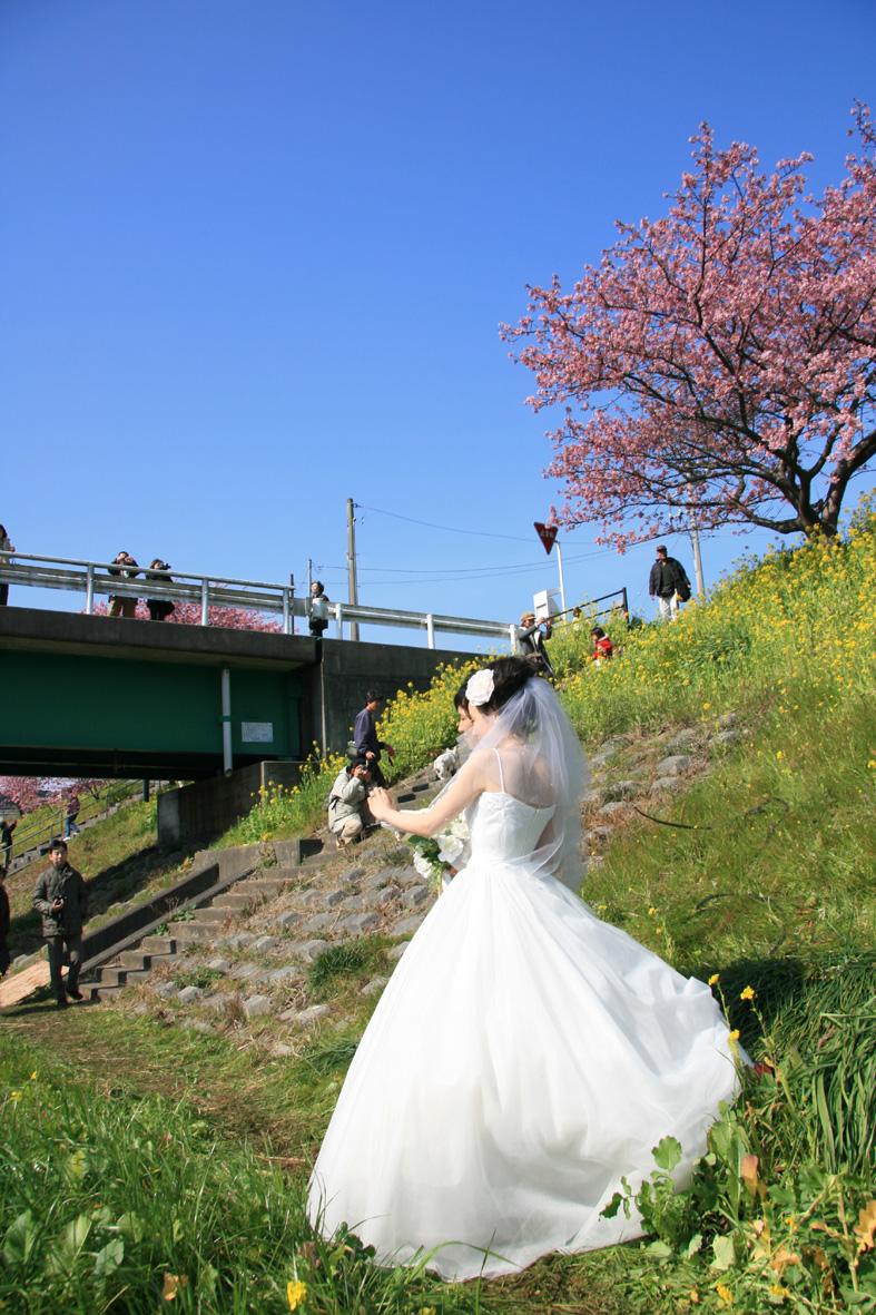 みなみ桜003
