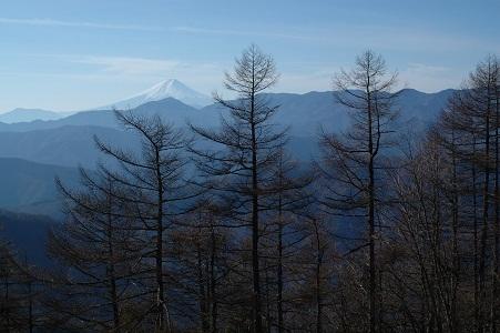 ブナ坂から富士