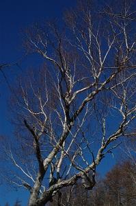 青い空と冬枯れの木
