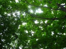 Green Days