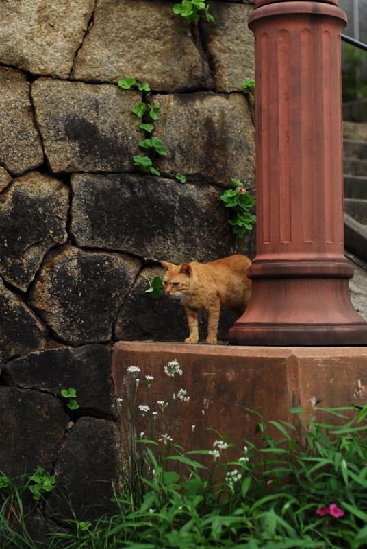 尾道散歩2013年9月15日 くもりのち雨 015