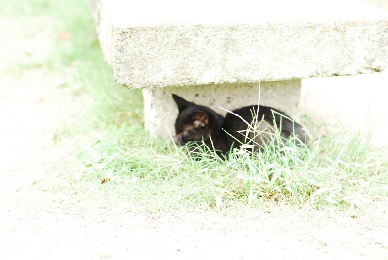 尾道散歩2013年9月15日 くもりのち雨 026
