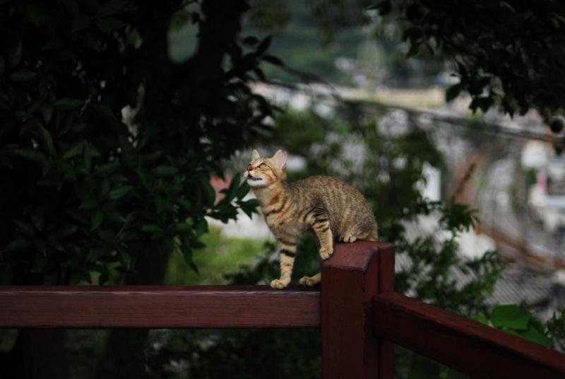 尾道散歩2013年9月15日 くもりのち雨 030