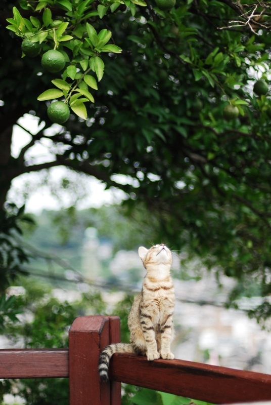 尾道散歩2013年9月15日 くもりのち雨 031
