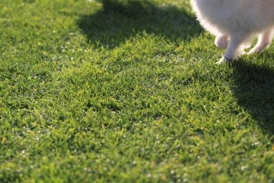 きれいな芝生のドッグラン♪