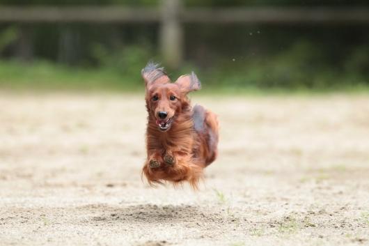s-飛行犬-3