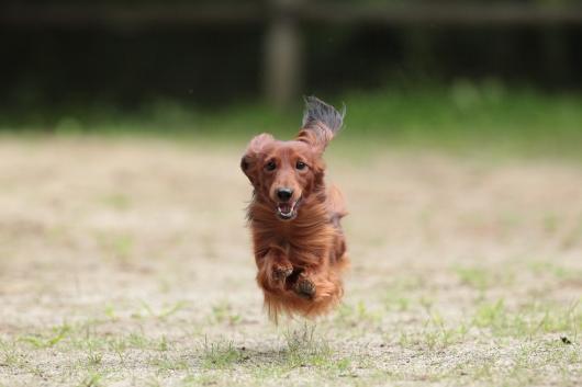 s-飛行犬-1