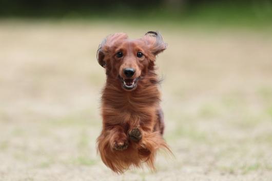 s-飛行犬-2
