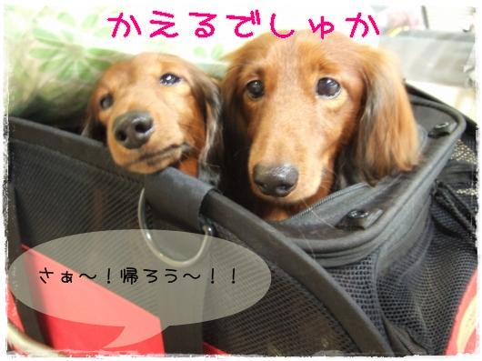 s-20110827-6.jpg