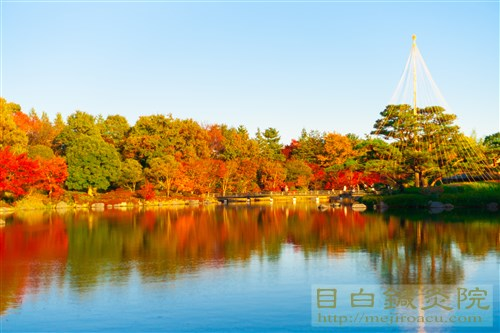 20141119昭和記念公園紅葉2
