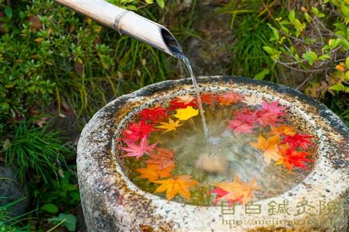 20141119昭和記念公園紅葉3