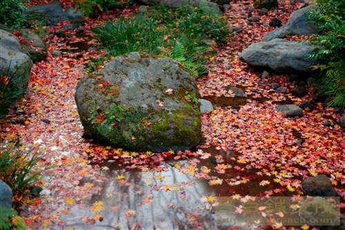 20141119昭和記念公園紅葉5