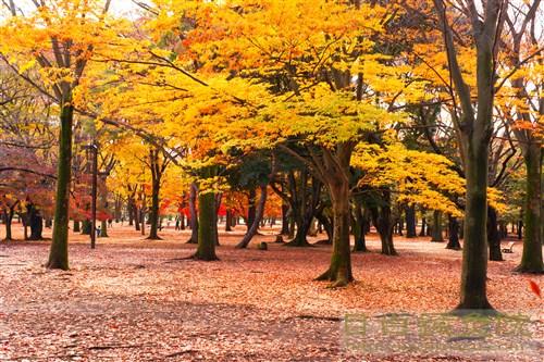 20141130代々木公園紅葉2