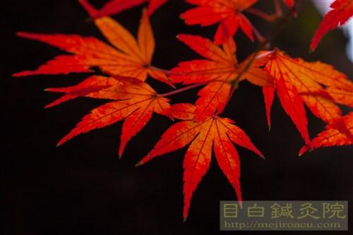 20141130代々木公園紅葉4