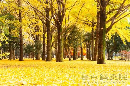 20141130代々木公園紅葉5