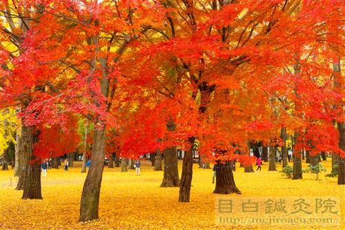 20141130代々木公園紅葉7