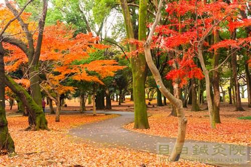 20141130代々木公園紅葉9