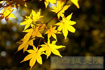 2013昭和記念公園紅葉5