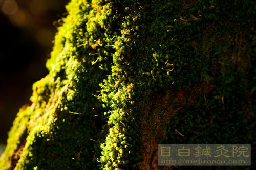 20141012長野紅葉蓼科8