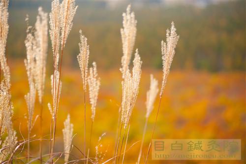 20141012長野紅葉蓼科11