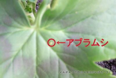 aburamushi.jpg