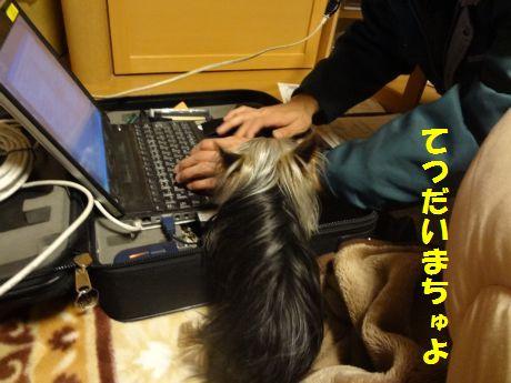 DSC04667.jpg