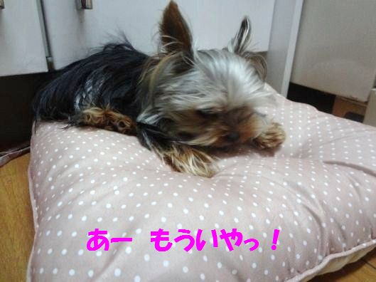 DSC06631.jpg