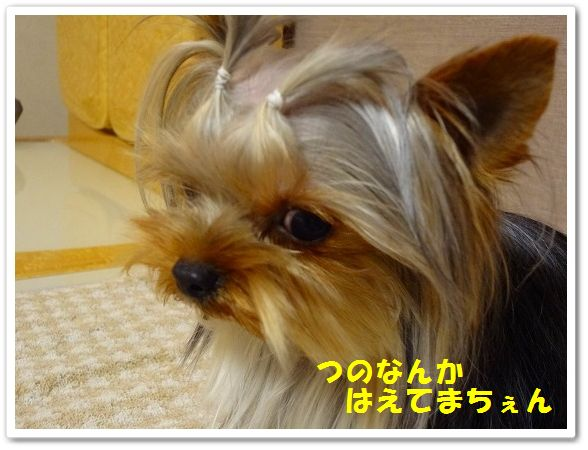 DSC06916LO.jpg