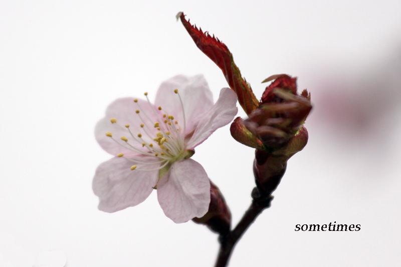 2011_0513c6 003a-80a