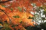 2013京都 紅葉6