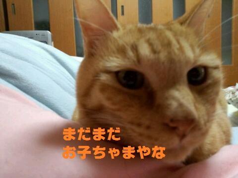 rps20131127_201041_298.jpg