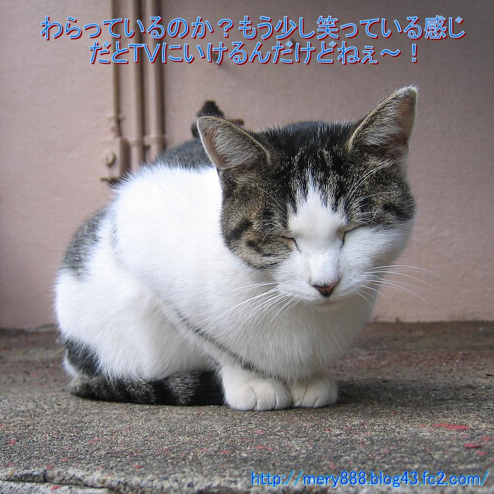 笑う猫の生活001
